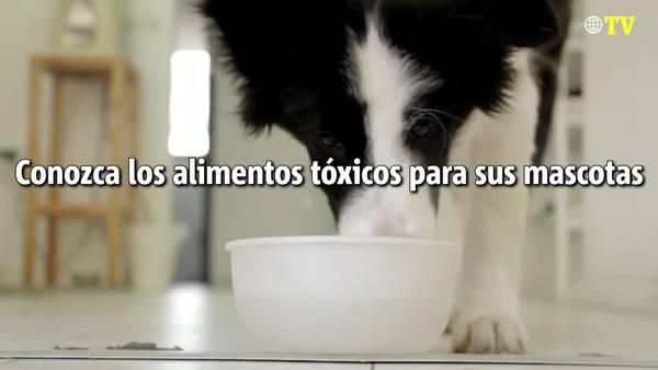 Conozca los alimentos tóxicos para sus mascotas