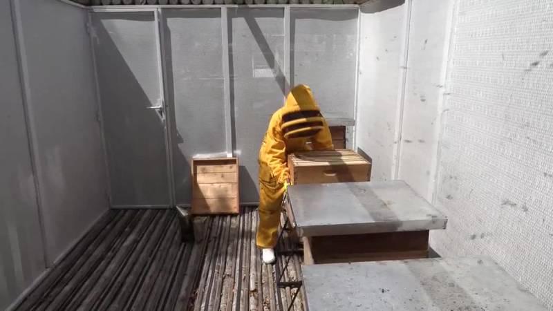 científicos colombianos desarrollan superalimento para proteger a las abejas de estos riesgos.